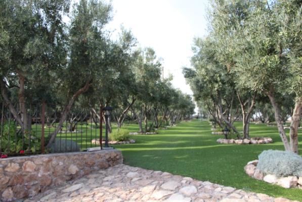Finca Lomamour - Olivar - Almería